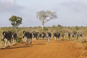Quelques lieux incontournables pour un séjour mémorable en Afrique du Sud