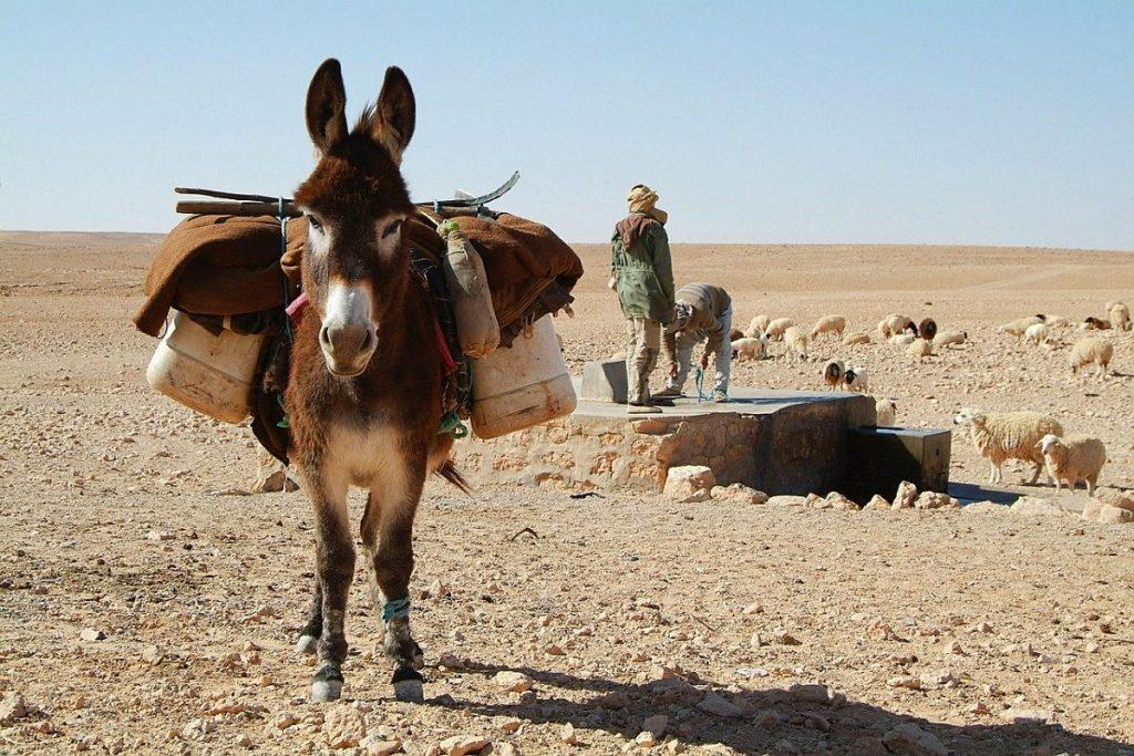 8 choses intéressantes à faire en Tunisie