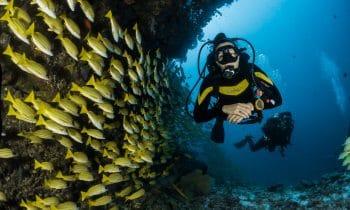 Les meilleurs endroits pour faire de la plongée